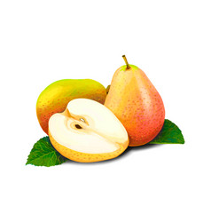 sweet fruit pears vector image