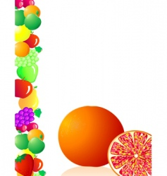 grapefruit fruit vector image