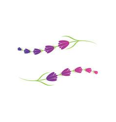 lavender flower logo symbol template vector image