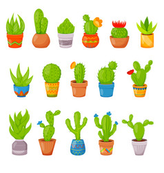 set 16 cactuses and succulents in flower pots vector image