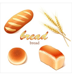 Set breads bakery products vector