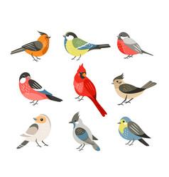 winter birds flat set vector image