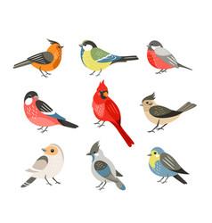 Winter birds flat set vector