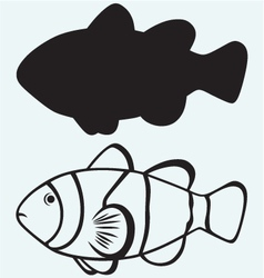 Tropical reef fish vector image vector image