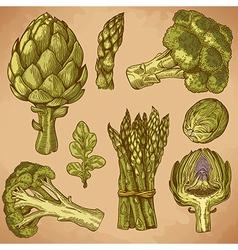 engraving green vegetables retro vector image vector image