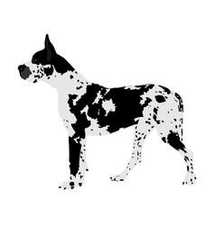 Portrait great dane dog isolated vector