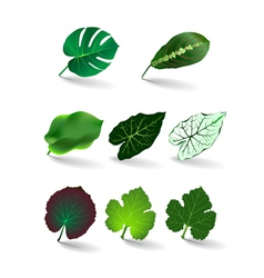 leaves set eps 10 vector image