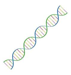Dna spiral vector