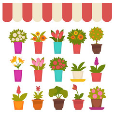 Flowers in pots set under clothing cover vector