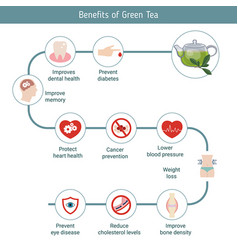 foods infographics green tea foods infographics vector image