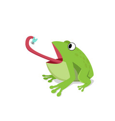 Green frog eat insect on white cartoon vector