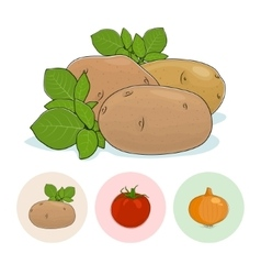 Icons Potato Tomatoes Onion vector