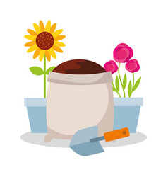 Potted flower roses and sunflower sack soil and vector