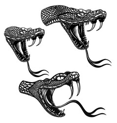 set heads poisonous snake in engraving vector image