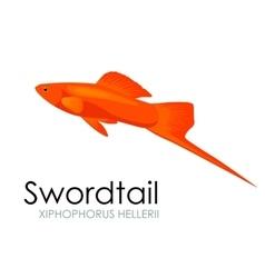 Aquarium fish swordtail vector image