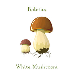 Funghi porcini or boletus mushroom isolated on vector