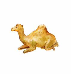 Lying camel watercolor drawing vector