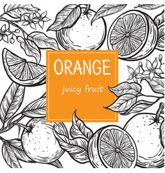 template hand drawn design with citrus fruits vector image