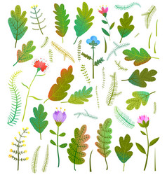 leaves foliage flowers forest collection vector image vector image