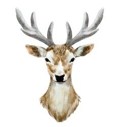 Watercolor hand drawn deer vector image vector image