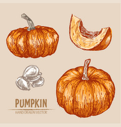 digital detailed pumpkin hand drawn vector image