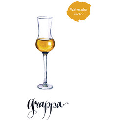 Glass of italian grappa brandy vector