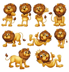 Lions in different positions vector image