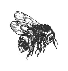 Bumblebee insect animal engraving vector
