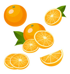 collection of orange fruits icons isolated on vector image