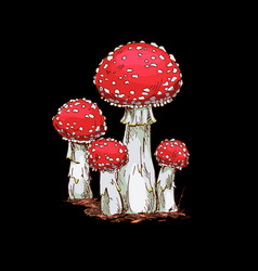 Family of fly agaric mushrooms isolated vector