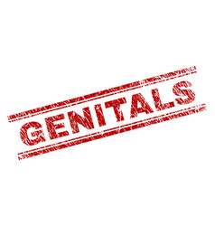 Grunge textured genitals stamp seal vector