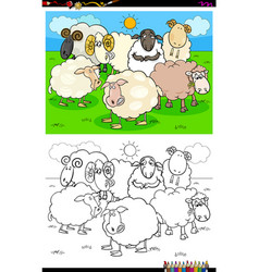 happy sheep characters group coloring book vector image