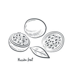 Passion fruit sketch vector