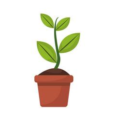 potted plant garden botanical element vector image