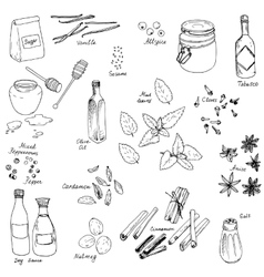 Spice set vector