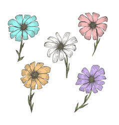 Collection of vintage colorful chamomile flowers vector