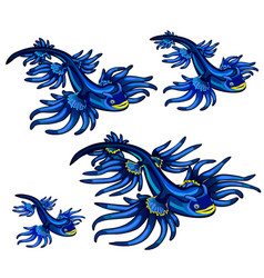 Gastropod mollusk glaucus atlanticus the blue vector