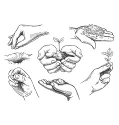 Hands with plant sprout farmer hand holding soil vector