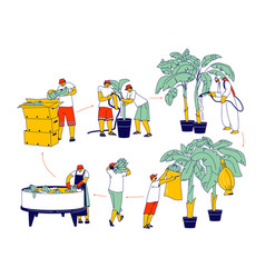 Labour characters working on banana plantation vector