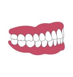 teeth and gums person vector image