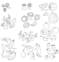 froots and berries set vector image vector image