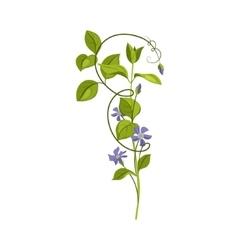 Bindweed Wild Flower Hand Drawn Detailed vector image