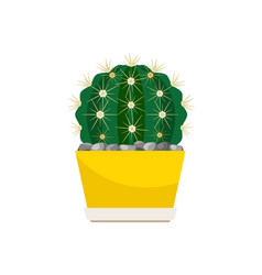 cactus house plant in yellow pot vector image vector image