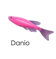 Aquarium fish Danio isolated vector image