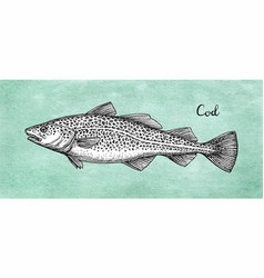 Ink sketch of cod fish vector