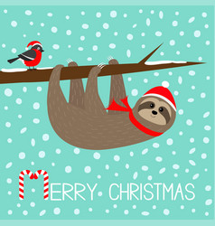 merry christmas sloth hanging on rowan rowanberry vector image
