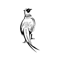 Ring-necked pheasant or common pheasant viewed vector