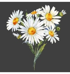 Watercolor daisy bouquet vector
