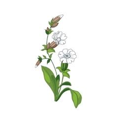 White Marigold Wild Flower Hand Drawn Detailed vector image