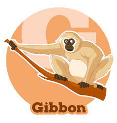 abc cartoon gibbon vector image
